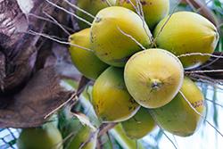 ココナッツオイルのオーガニック認定団体について。マークの種類
