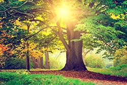 夏から秋の不眠症対策は「リラックス」と「栄養」が決め手