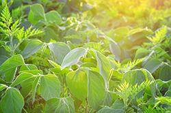 必須ミネラルてんこ盛り! 健康お役立ち食品「豆」の毒性について知りたい!