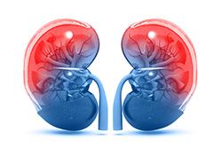 臓器特異性自己免疫疾患(特定の臓器に起こる自己免疫疾患)